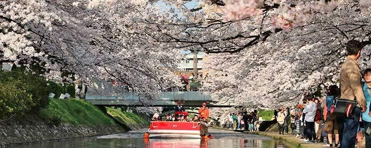 松川お花見遊覧船2016