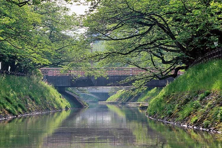 早朝の松川べり(舟橋)