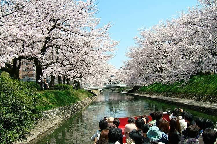満開の松川の桜を船から見る