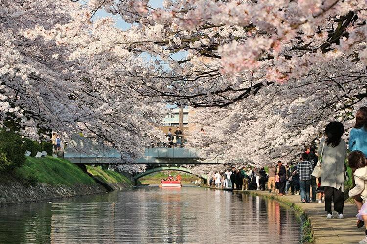 華明橋と桜橋と遊覧船「神通」