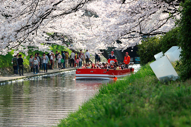遊覧船やリバーウォークから満開の桜を楽しむ人々