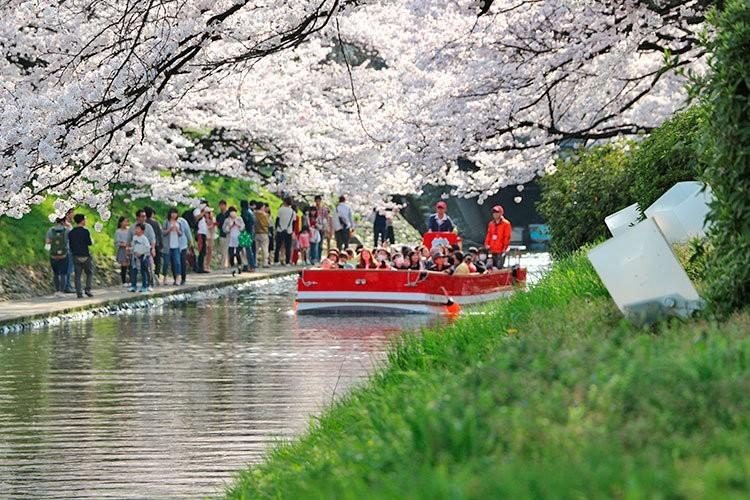 Matsukawa Sakura Cruise and Green