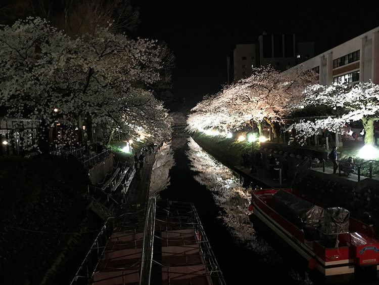 Night cherry blossoms of Matsukawa
