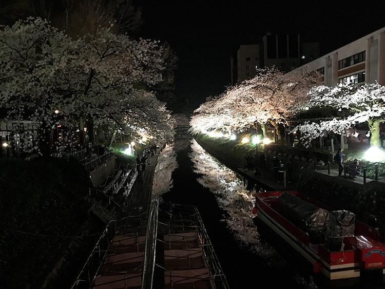 松川の夜桜 X