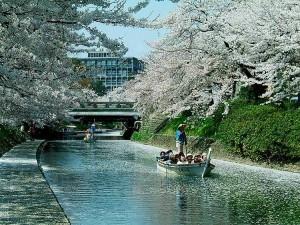 sasabune-sakura